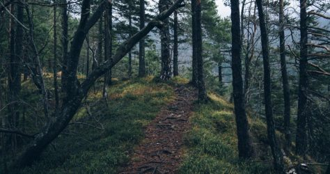 adventure-forest-nature-4029-824x550